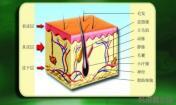 祛痘常识之皮肤基本结构